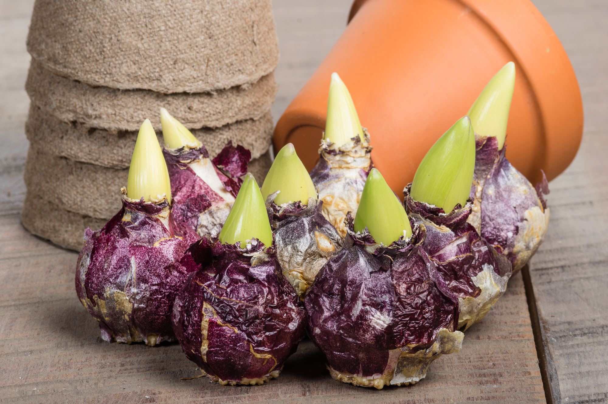 It's Not Too Late: Planting Fall Bulbs - The Neat Nook