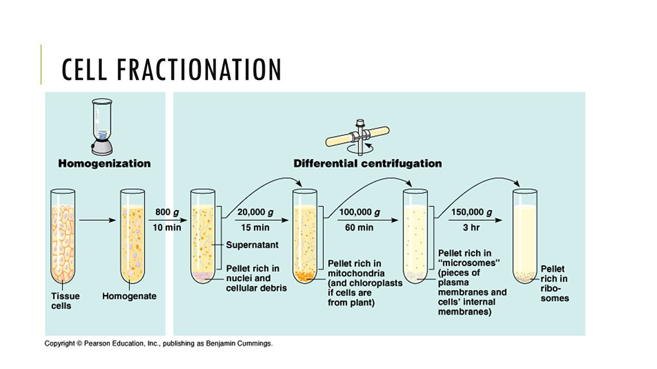 CELL+FRACTIONATION+STEP+2%3A