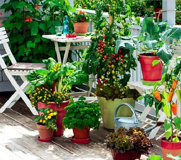 Image result for Kitchen garden
