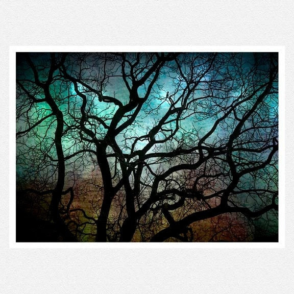 Nature Photography teal black tree by moonlightphotography on Etsy