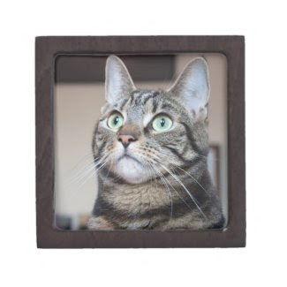 Green-Eyed Tabby Cat Gift Box