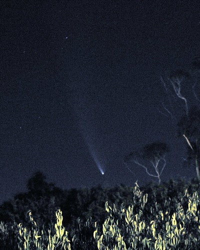 Comet McNaught from Kingston