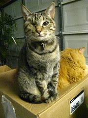 Maggie sharing the box with Jasper