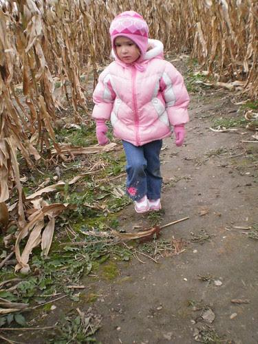 Corn maze 2010 (23)