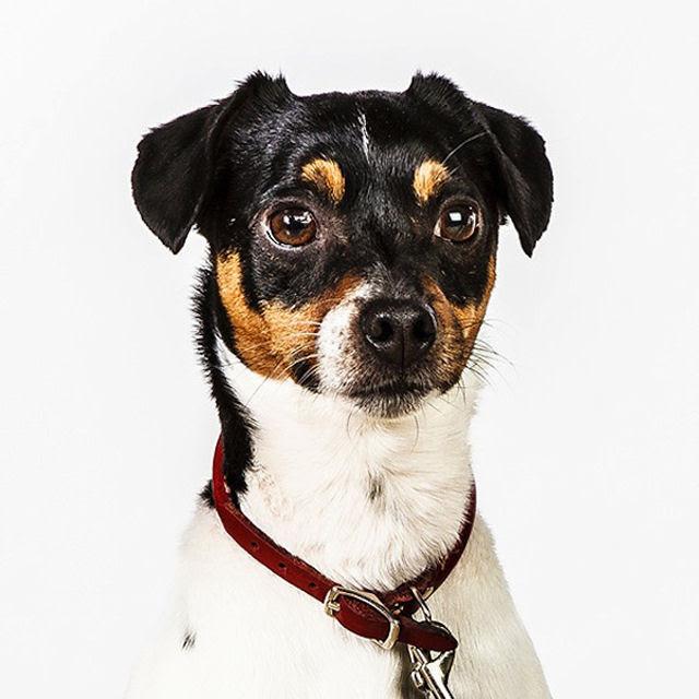 Retratos de cães cheios de personalidade 20