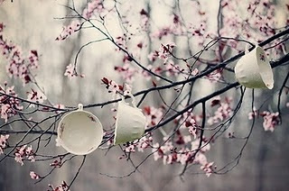 cakes, flowers, pretty, tea, tea cup, teacup, tree