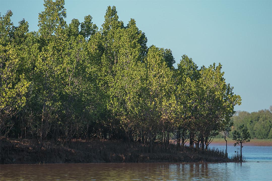 MADAGASCAR-Mangroves