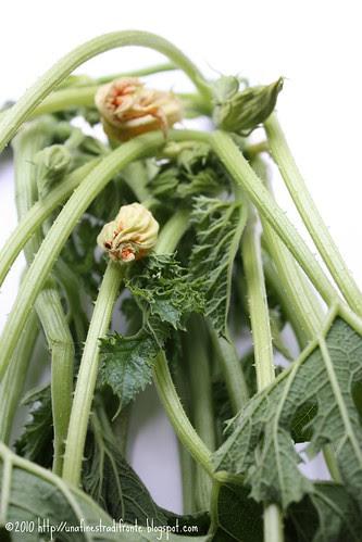 Talli di zucchina
