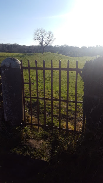 image of gate,field and tree