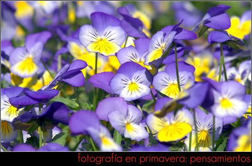 fotos en primavera: pensamientos