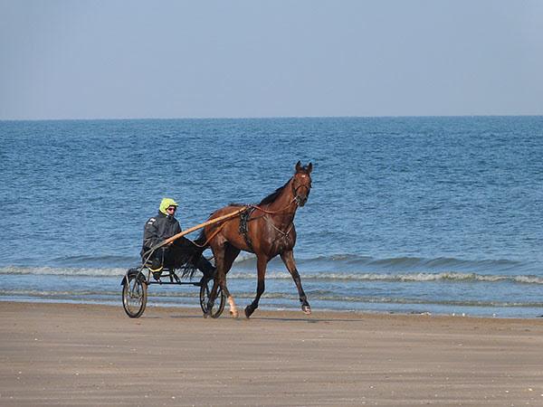 chevaux 5