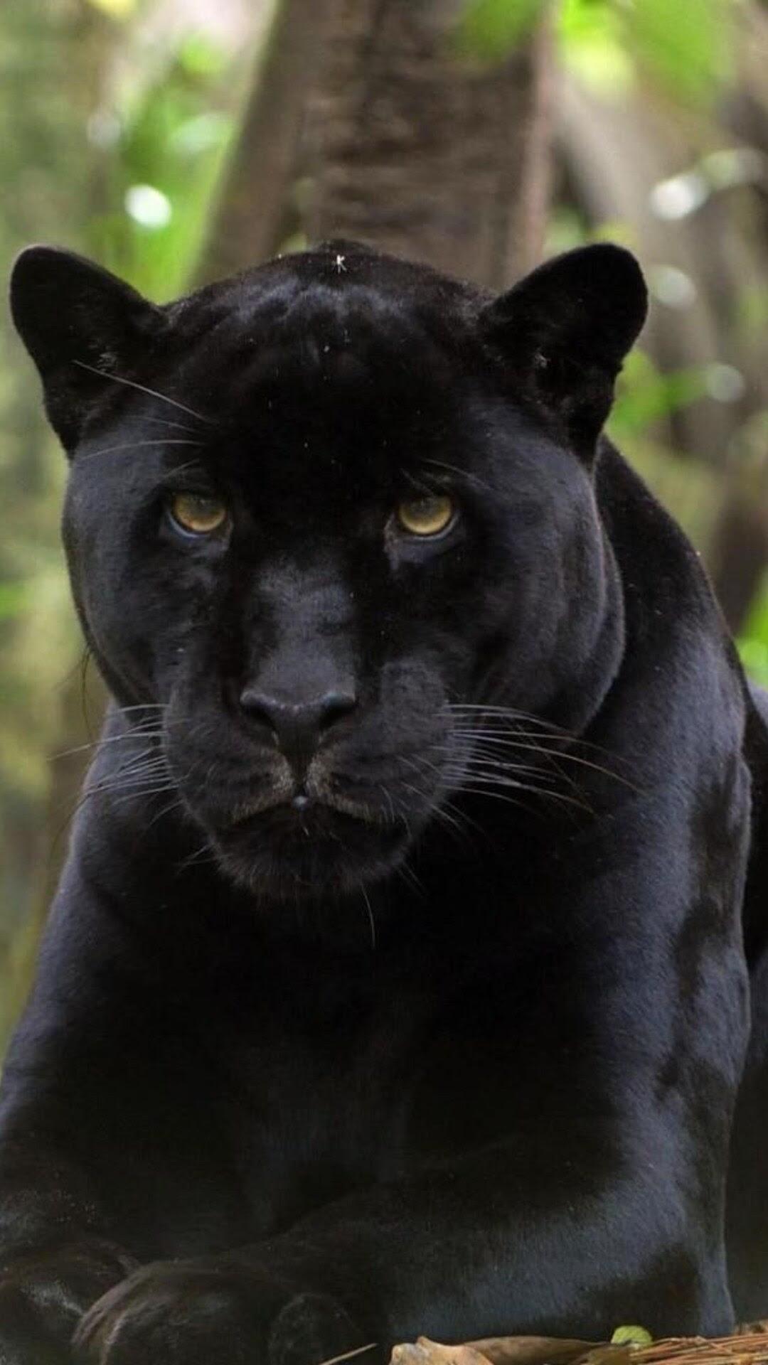 1080x1920 Black Panther 2 Iphone 7,6s,6 Plus, Pixel xl ...