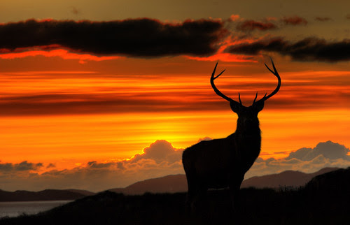 Monarch of the Glen at Sunset by Fraser Ross