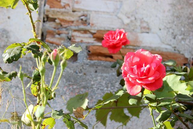 Kreikka, Samos 2012 037