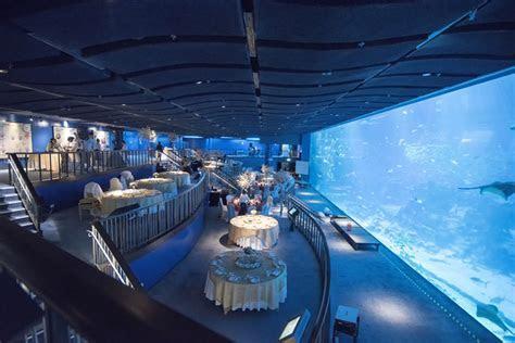 Rws Sea Aquarium Wedding   1000  Aquarium Ideas
