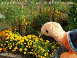 Kamegoro & flowers