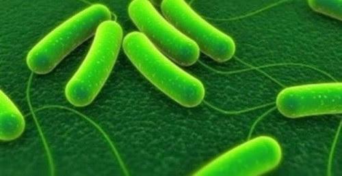 βακτηρια