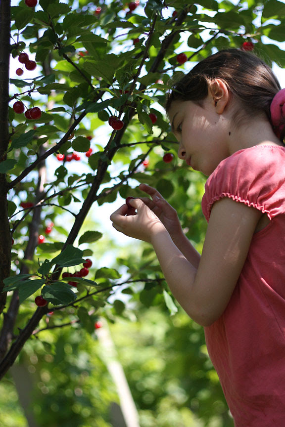 picking the cherries