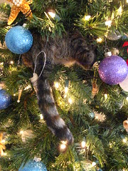 This is why we have shatter-proof ornaments