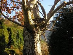 sommer, høst, 2008 091