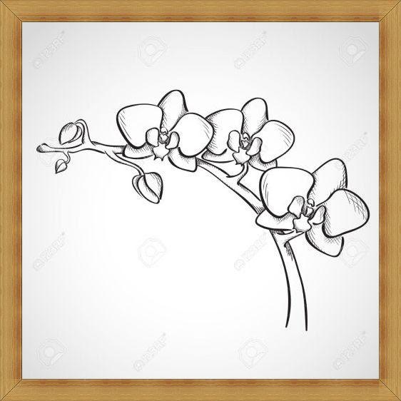 Gambar Sketsa Bunga Indah Mulai dari Mawar Melati