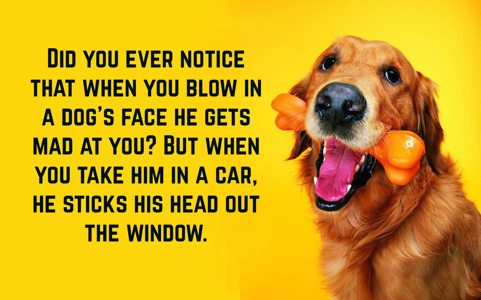 Funny Dog Quotes   Text & Image Quotes   QuoteReel