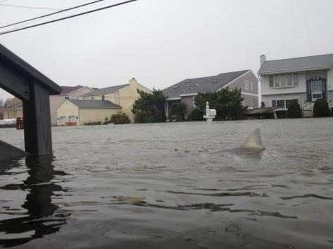 Ο Σάντι μαζί με τις πλημμύρες έφερε και .....καρχαρίες στους δρόμους !