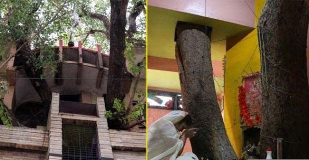 A Jabalpur Family Didn't Cut 150-year-old Tree While Building Their House