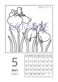 無料の塗り絵花のぬりえカレンダー2007平成19年5月ハナショウブ