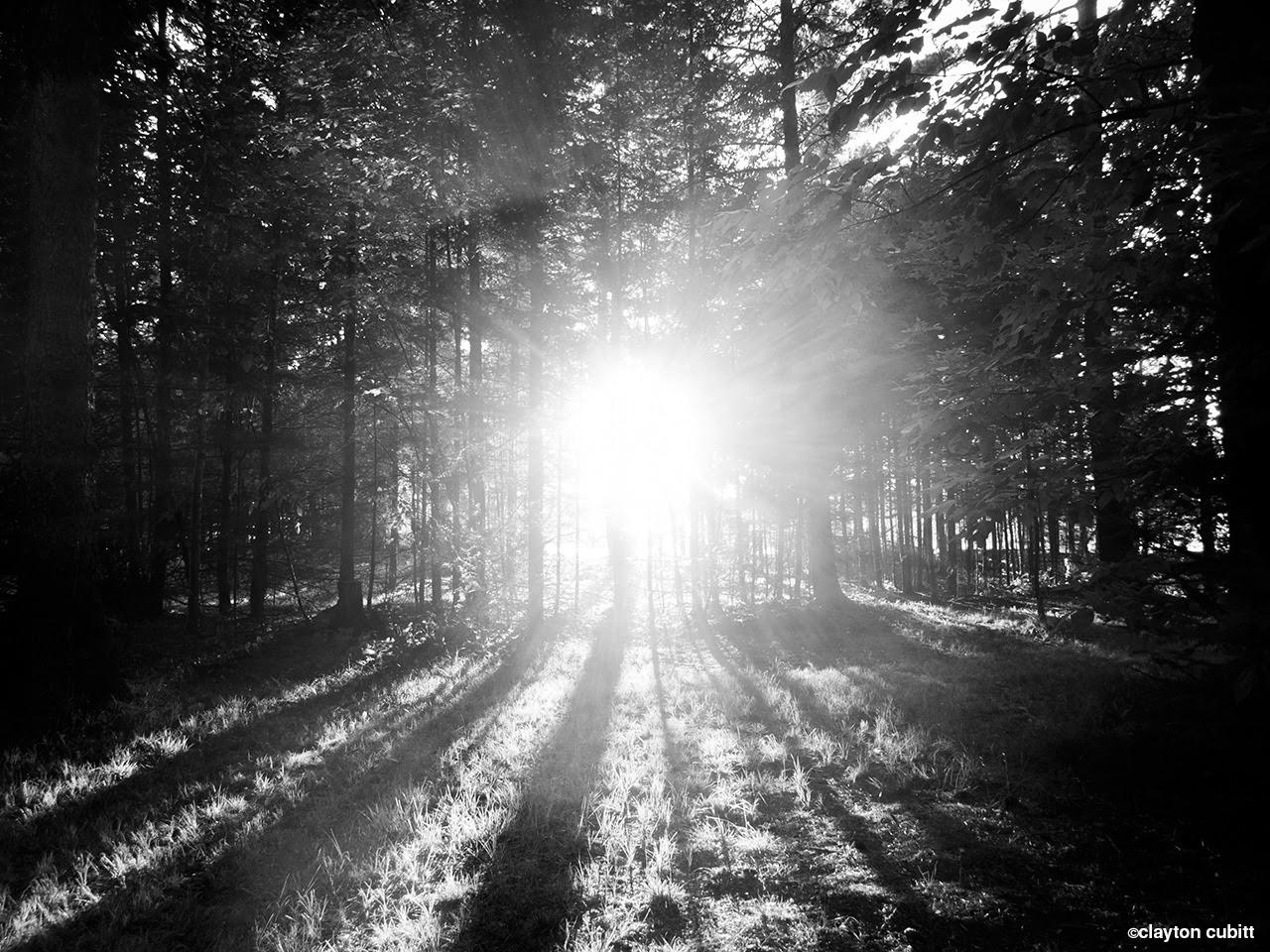 Sunset through the pines, Minnesota  (3168)