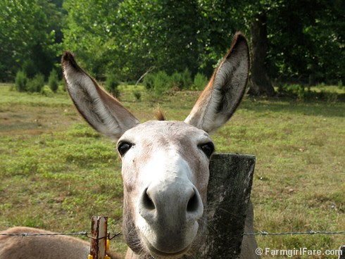 The Daily Donkey 52