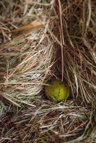 Tennis ball hunt-0244
