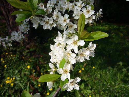 Enfin le printemps