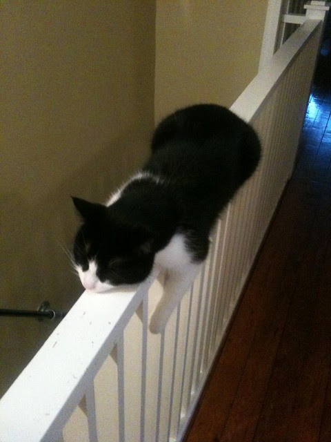 Ben competitive napping on banister