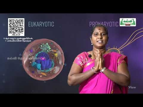 11th Microbiology பாக்டீரியாவின் தோற்றம் இயல் Kalvi TV