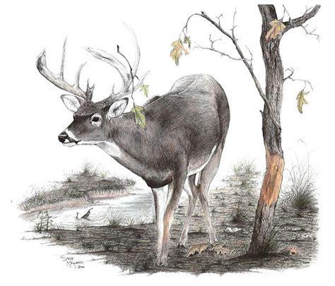 rubline  steve maynard hunting  fishing deer