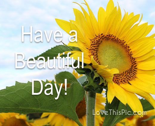 Have A Beautiful Day Pictures Photos And Images For Facebook