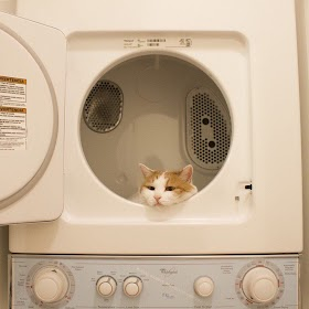 Rumah Kucing Lucu