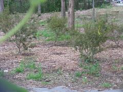 Nursery Plants  that Replaced Mowed Down Understory