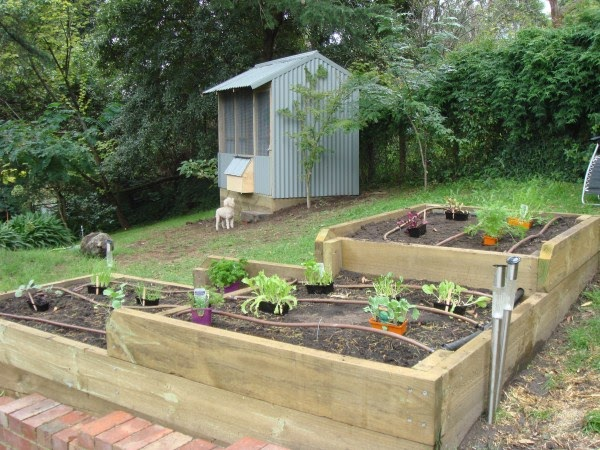 backyard chicken coops melbourne tutor