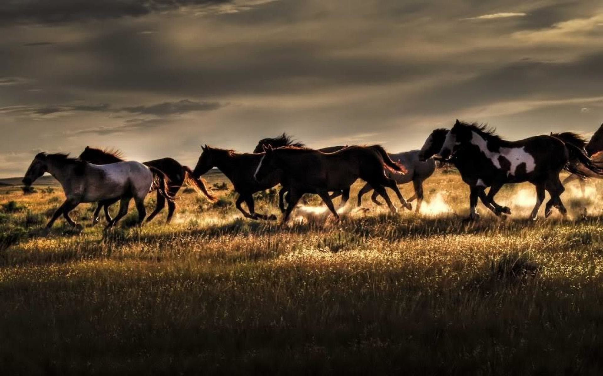 Wild Horse Wallpaper 59 Images