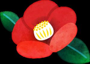 椿の花 Penta