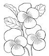 Gambar Sketsa Bunga Anggrek Berwarna