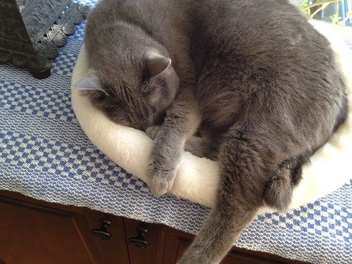 Morty sleeping covering head.JPG