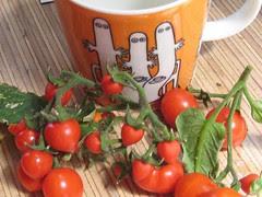 Hatifattereners and tomatoes