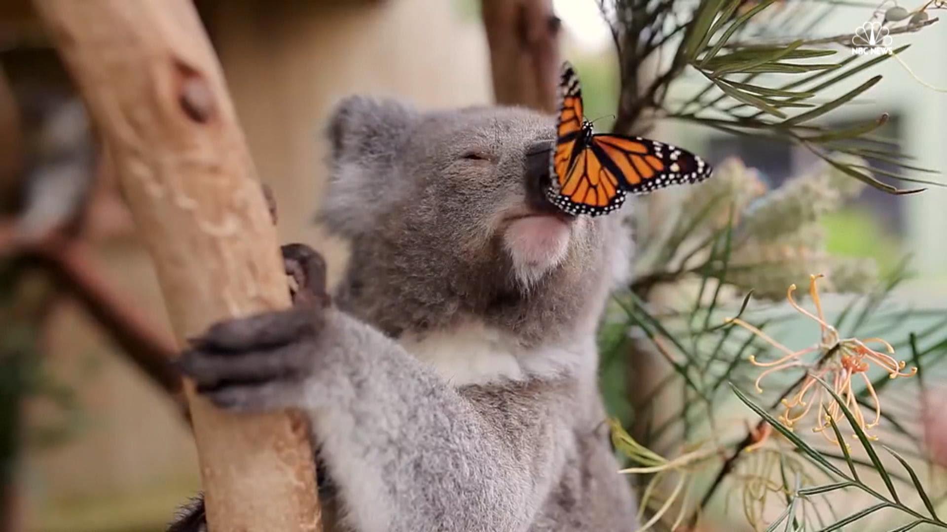 x_lon_koala_161005