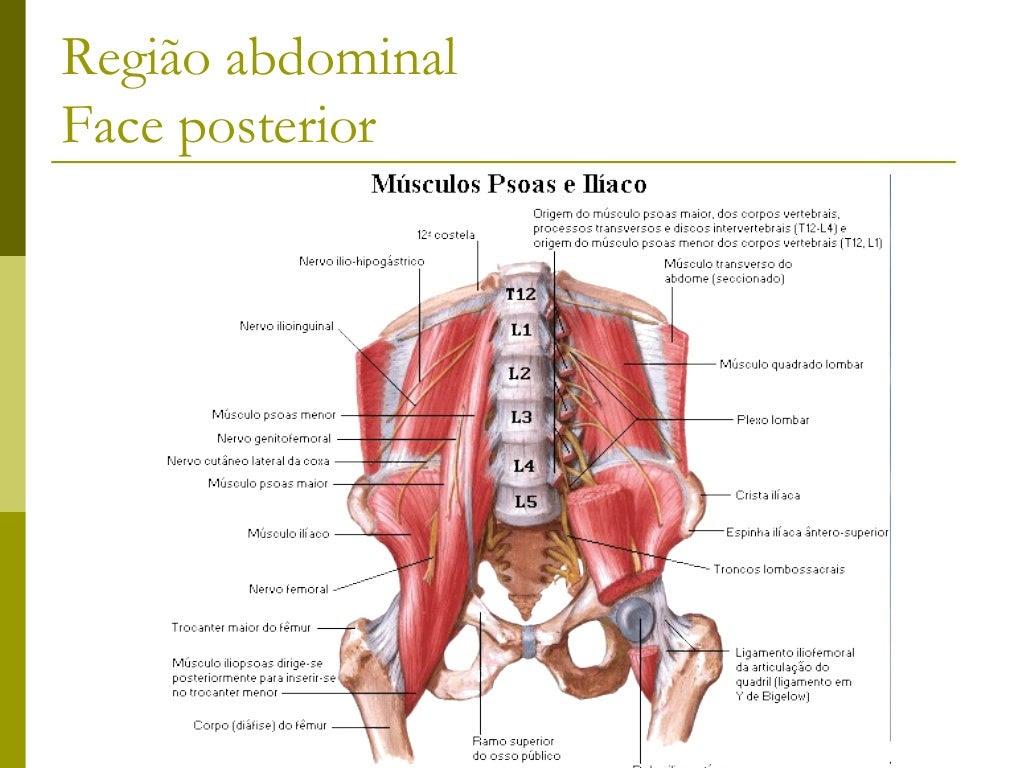 Trapézio Músculo plano, triangular que forma em  conjunto com outros músculos as porções  superior e dorsal da região cer...