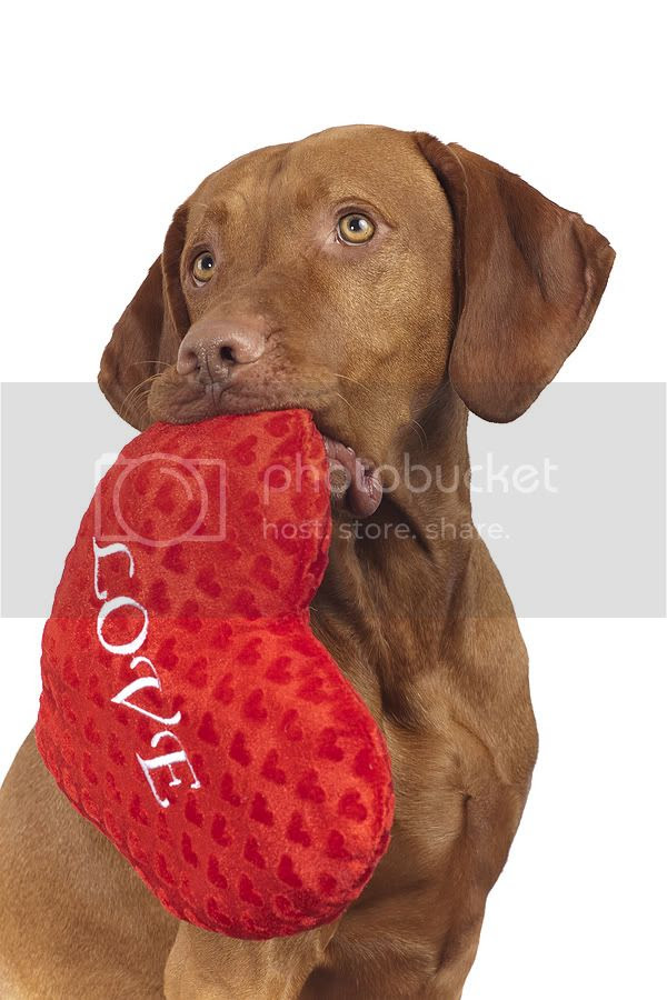 Show Your Love By Being A Responsible Pet Owner Or Pet Parent