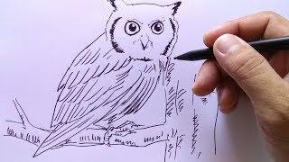 All Clip Of Cara Menggambar Burung Hantu Dengan Mudah Bhclipcom