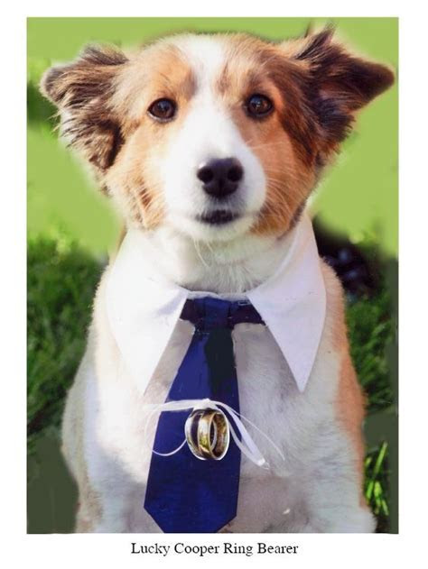 Dog ring bearer too cute. Would love for my Toby boy to be